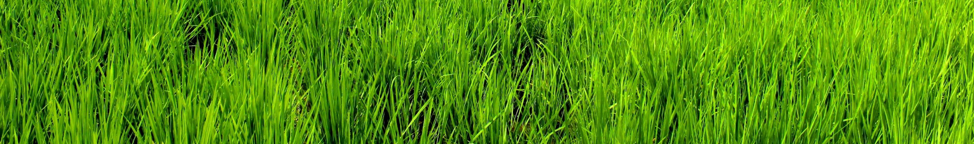 20代から始める、幸せな田舎暮らし。in松本・安曇野
